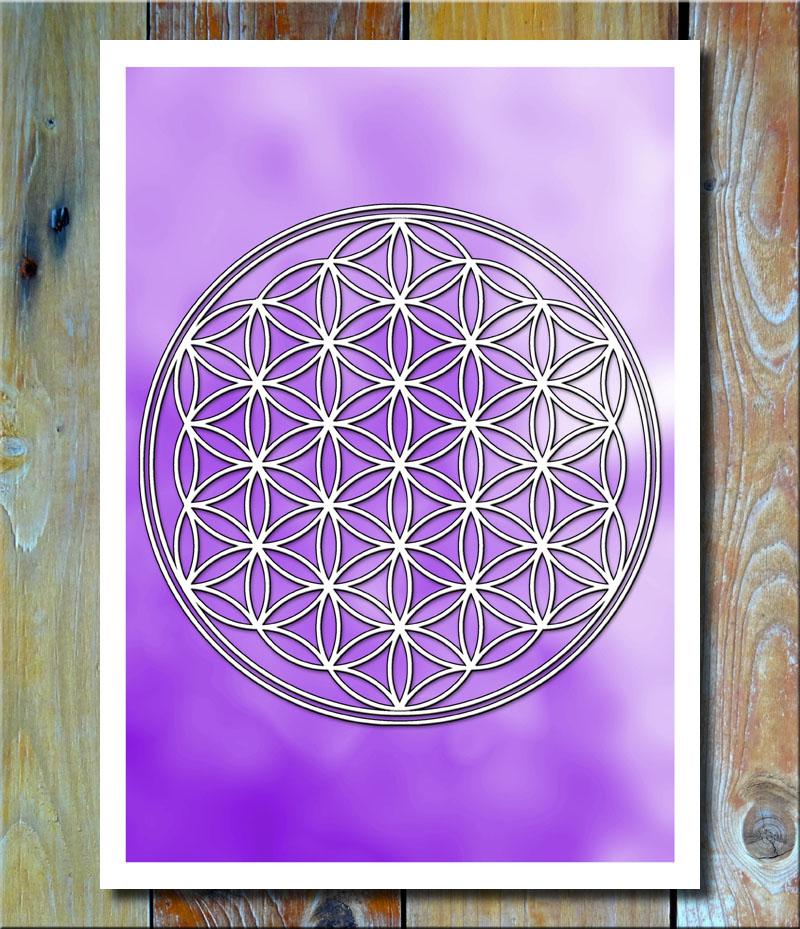 Blume des Lebens Viola